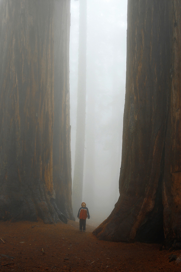 A LAND OF GIANTS in Giant Fog