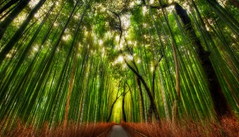 Weekly Photography Challenge: Trees – With Prizes from ViewBug