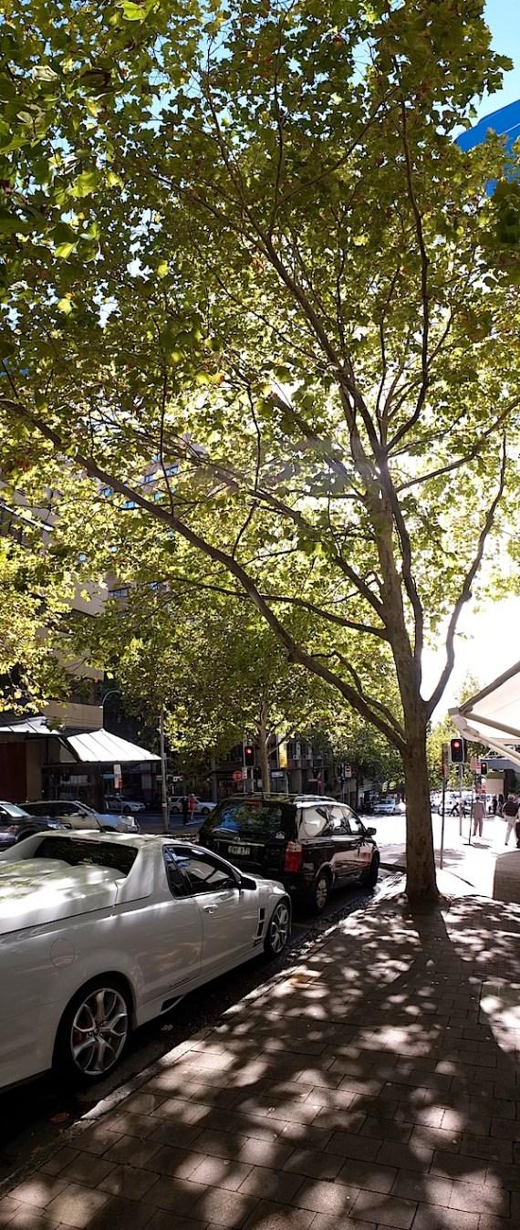 北悉尼全景8.JPG