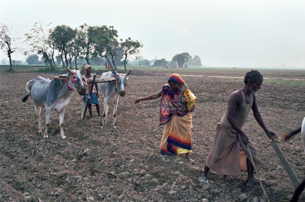 Ploughing Bihar-Nick-Fleming.jpg