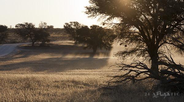 Kgalagadi Dust