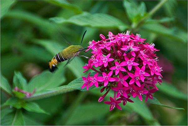 bee-flowers-magenta.jpg