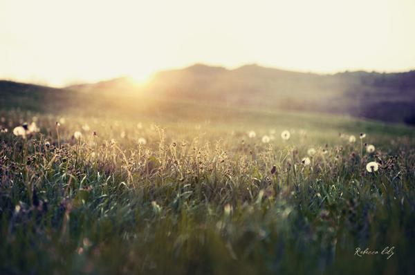 Image: Digital | Nikon D700 | Nikkor 24-70mm 2.8 @ f/2.8