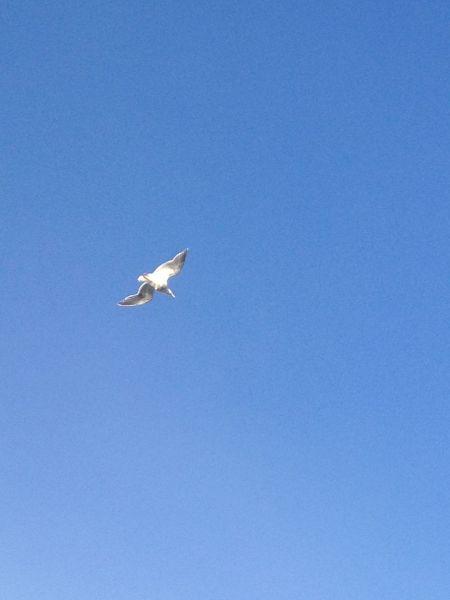 Image: Seagull, Washington, USA