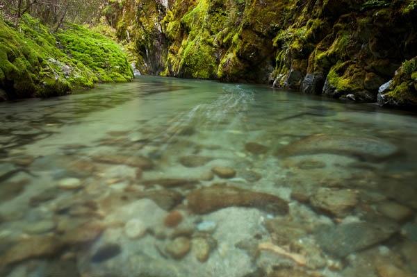 Immersion - Brandy Creek.jpg