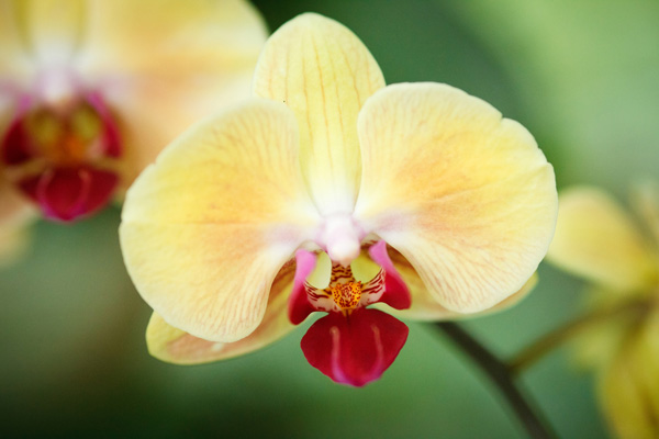 Image: I took this close-up photo of a flower with an 85mm lens. I set a shutter speed of 1/250 seco...