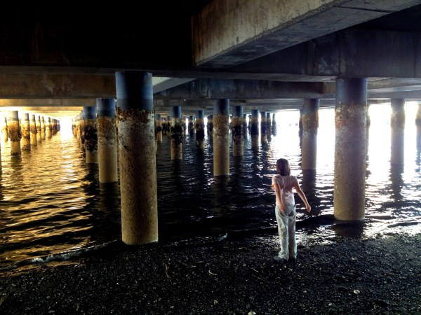 Image: Under the dock, Clinton, Washington, USA