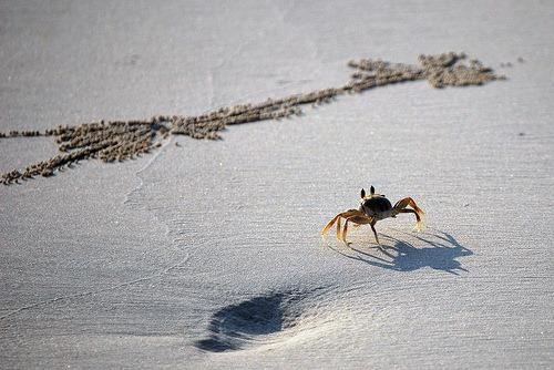Walk Like a Crab