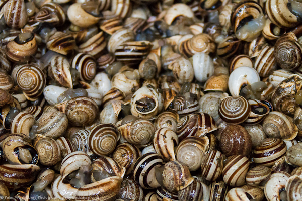 Image: Snails in Fes, Morocco