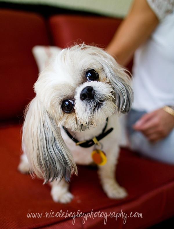 dog photography.jpg
