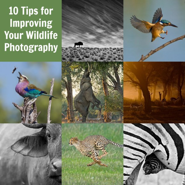 10 Tips for Improving Your Wildlife Photography