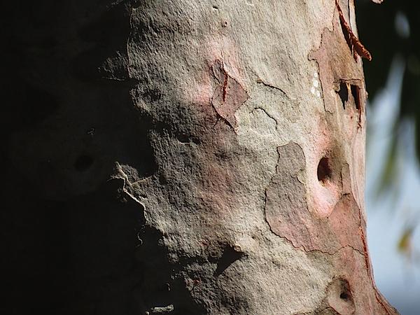 Bark 2.JPG