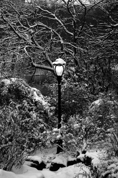 Lamppost at Dusk, Central Park