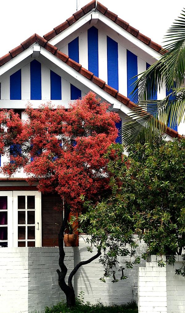 House and flame tree.JPG