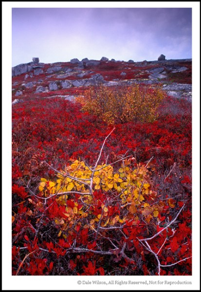 Image: This autumn scene near Peggy's Cove, Nova Scotia is not overly exciting but provides a good e...
