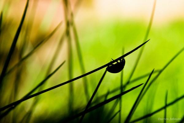 Ladybird Silhouette