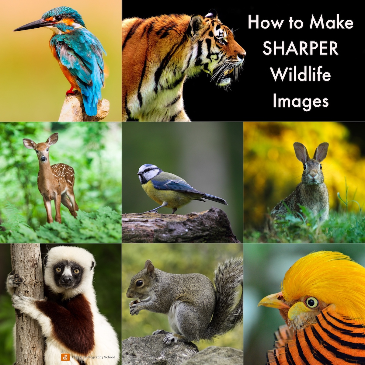 Making Sharper Wildlife Photographs - [Part 1 of 2]