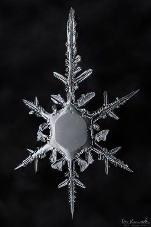 How to Photograph Snowflakes with a DSLR