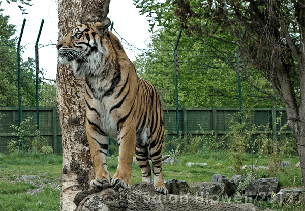 The Sony RX100 at Dublin Zoo [USER REVIEW]