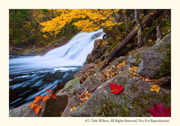 Mary Ann Falls in 2nd week of October. Yes, I placed the leaves; however, I later heard a photographer swear up and down that those leaves in his picture were exactly as he found them!