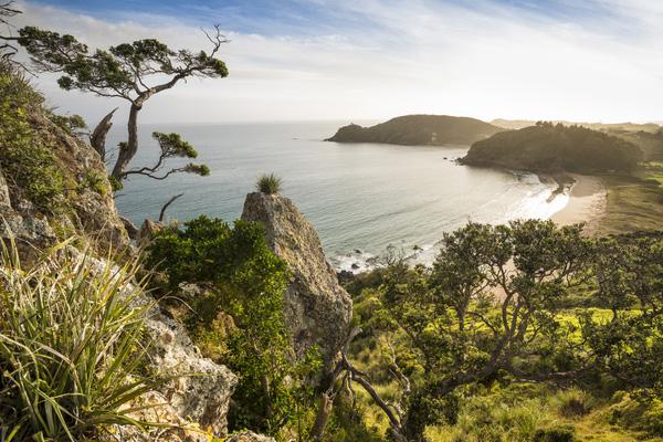 NZ NO Pataua South 4 1