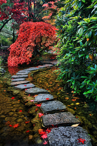 Leading Lines: Japanese Garden by Anne McKinnell