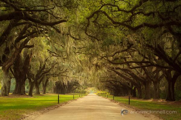Linhas principais: Avenue of Oaks, Carolina do Sul, por Anne McKinnell