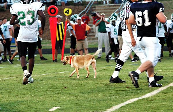 dog on the football field
