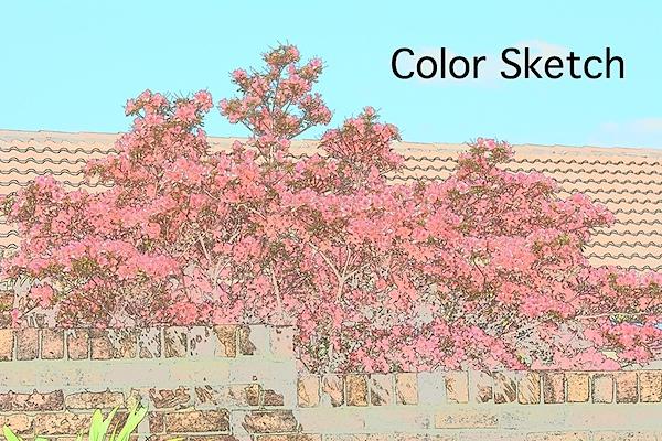 Flowers color sketch.JPG