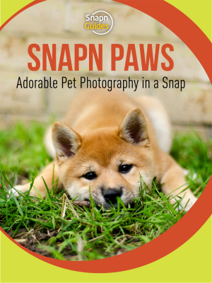 Your Essential Guide to Photographing Cats and Dogs: Snapn Paws