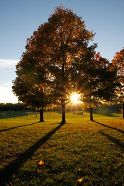 McEnaney sunflare vertical tree