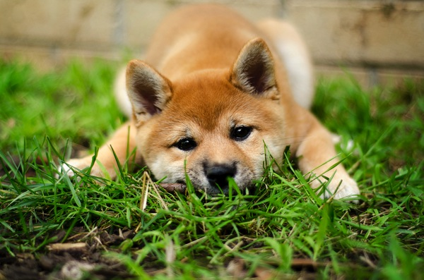 Adorable pet photos 1
