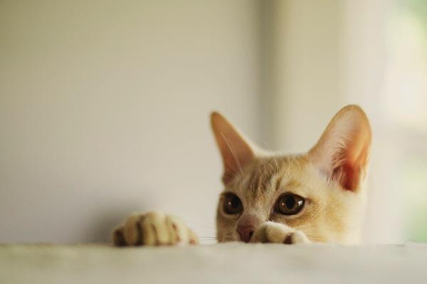 Adorable pet photos  3