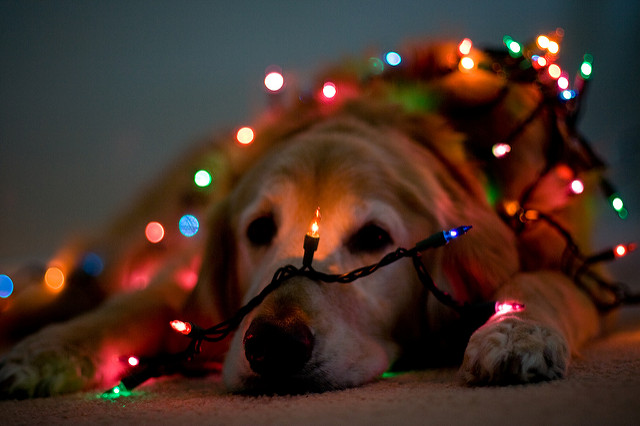 How to Take Beautiful Bokeh Christmas Images [With 39 Stunning ...