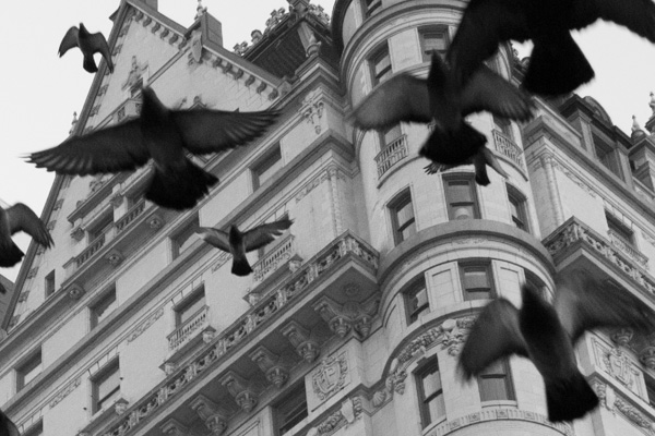 crop of birds flying around a building