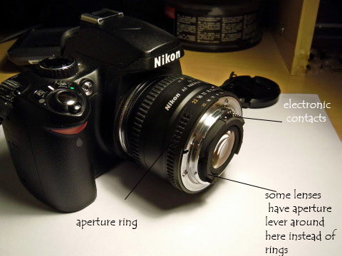 Reverse lens macro photography 07