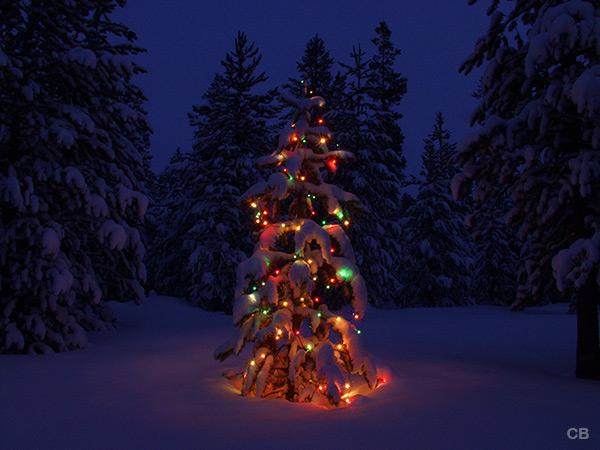 Winter wonderland holiday photo tree 17