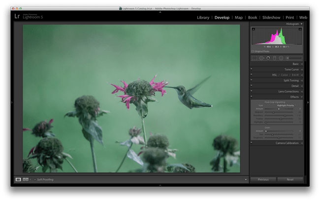Hummingbird-before