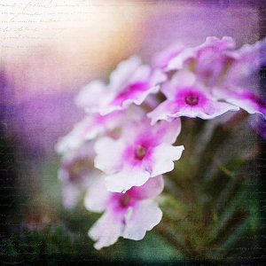 Textured-purple-flower-600