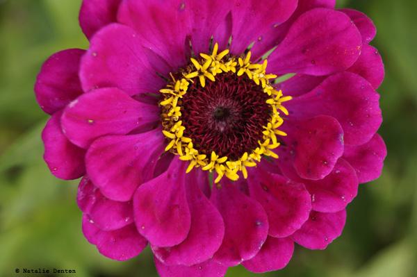 pink flower macro Natalie Denton