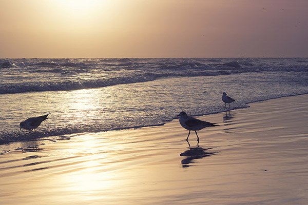 three birds at sunset