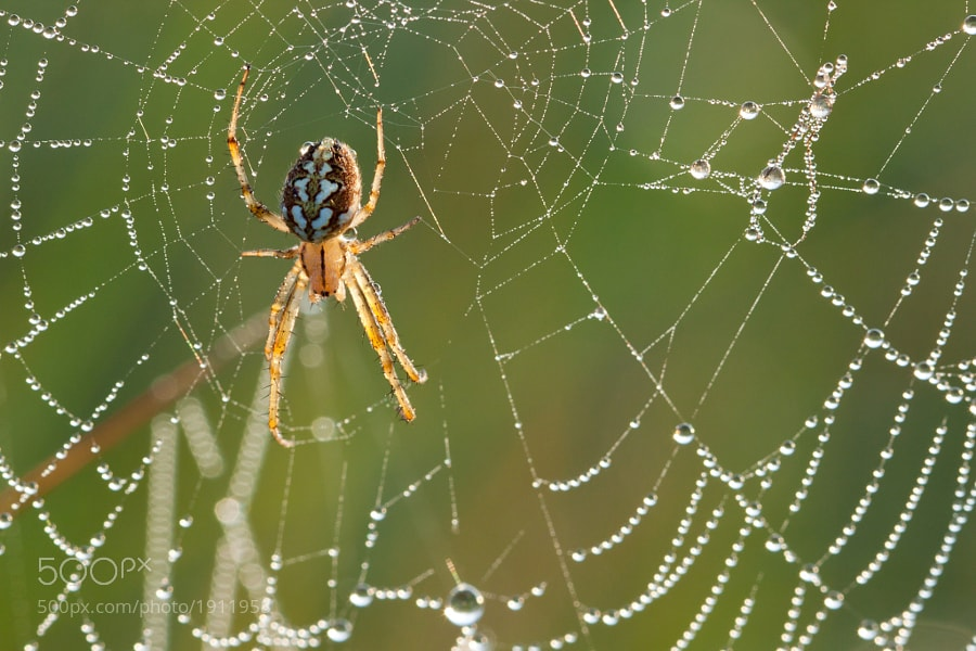 Photograph Spider by Thomas Forysiak on 500px