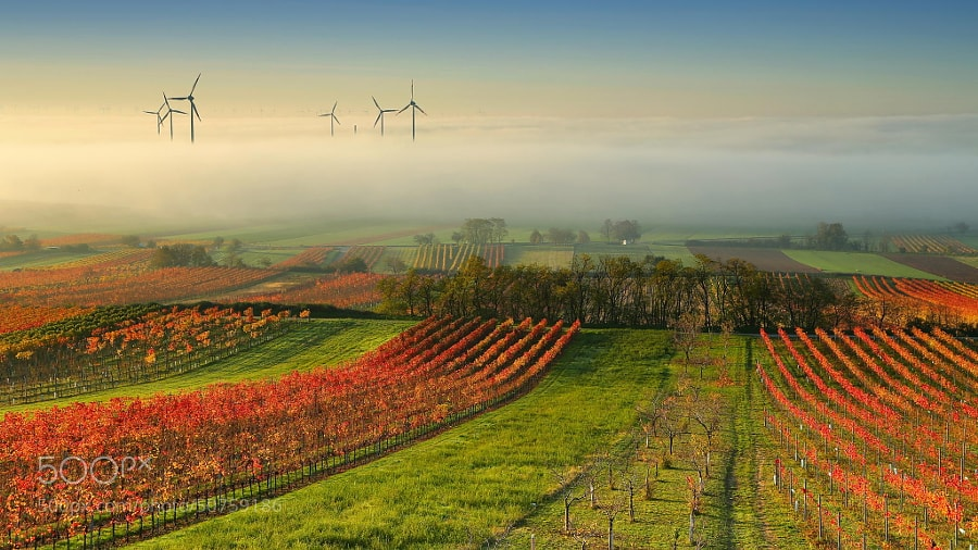 Photograph Wine Country in the mist by Matej Kovac on 500px
