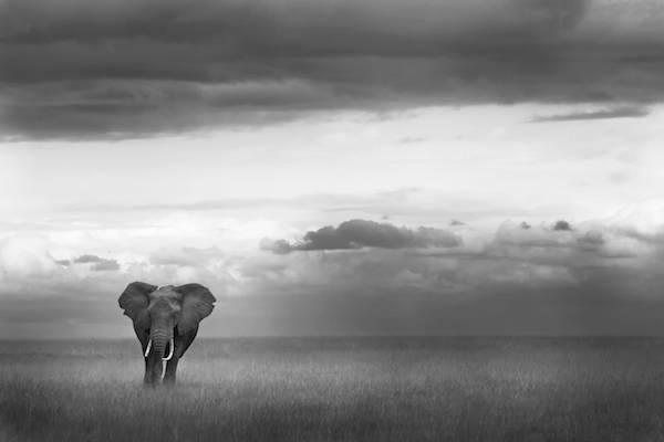 Photography backgrounds elphant africa piper mackay 01