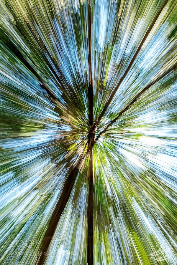 Photograph Warp:tree by Fahad Abdulhameed on 500px