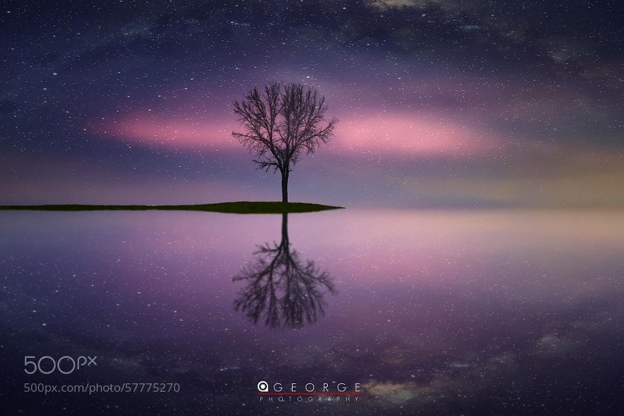 Photograph Lonely Tree by Ajay George on 500px