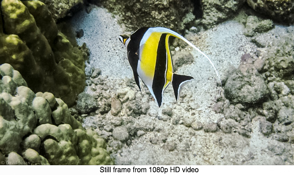 DJulian Moorish Idol HD still