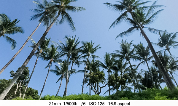 DJulian Palm Trees 21mm