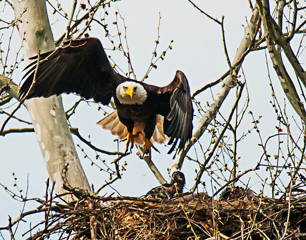 eagle-nest