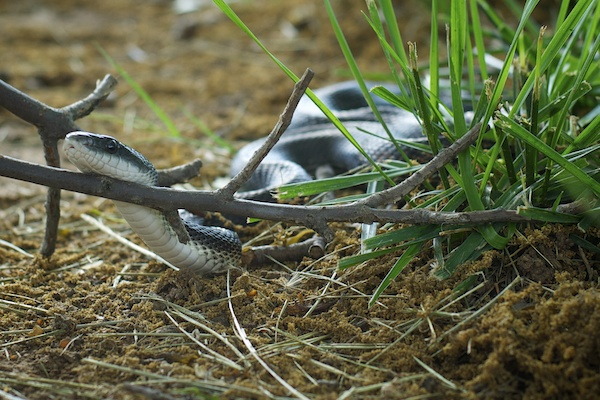 image-005-snake